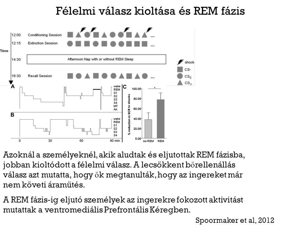 Félelmi válasz kioltása és REM fázis Azoknál a személyeknél, akik aludtak és eljutottak REM fázisba, jobban kioltódott a félelmi válasz. A lecsökkent