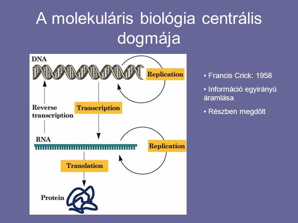 A molekuláris biológia centrális dogmája Francis Crick: 1958 Információ egyirányú áramlása Részben megdőlt