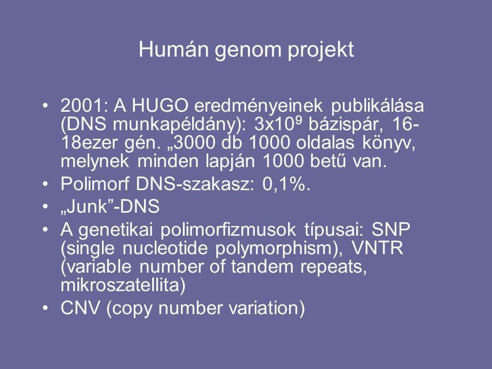 """Humán genom projekt 2001: A HUGO eredményeinek publikálása (DNS munkapéldány): 3x10 9 bázispár, 16- 18ezer gén. """"3000 db 1000 oldalas könyv, melynek m"""