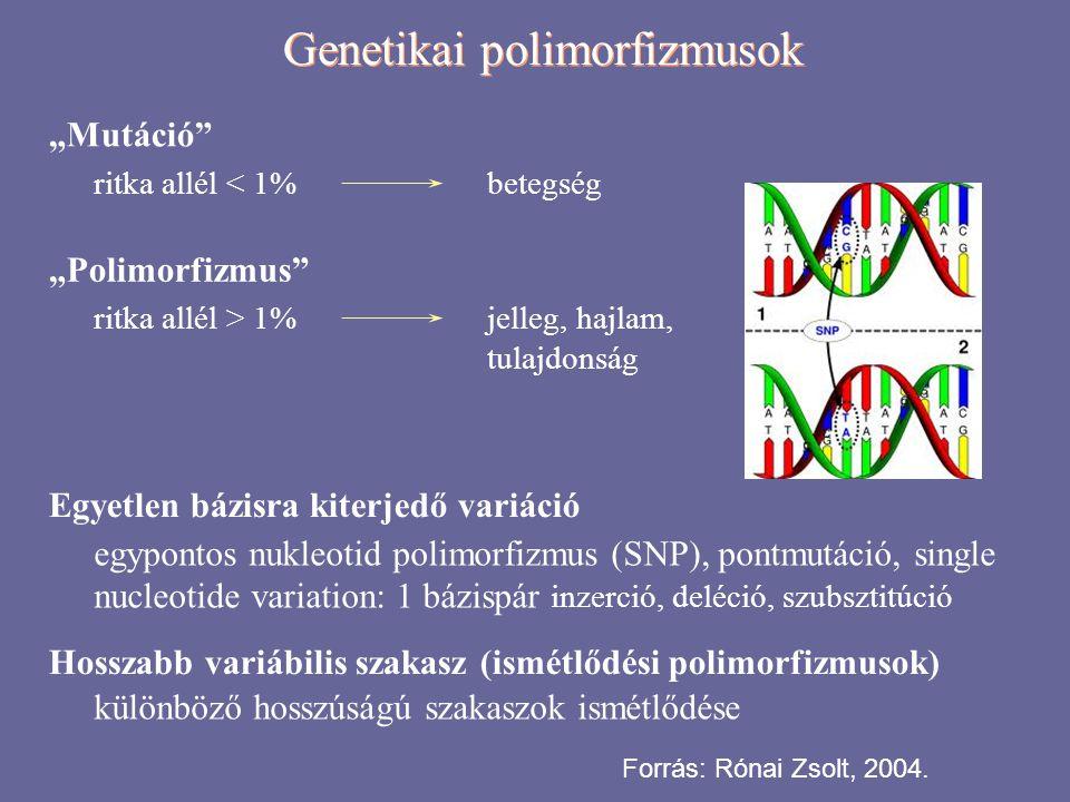 """Genetikai polimorfizmusok """"Mutáció"""" ritka allél < 1%betegség """"Polimorfizmus"""" ritka allél > 1%jelleg, hajlam, tulajdonság Egyetlen bázisra kiterjedő va"""