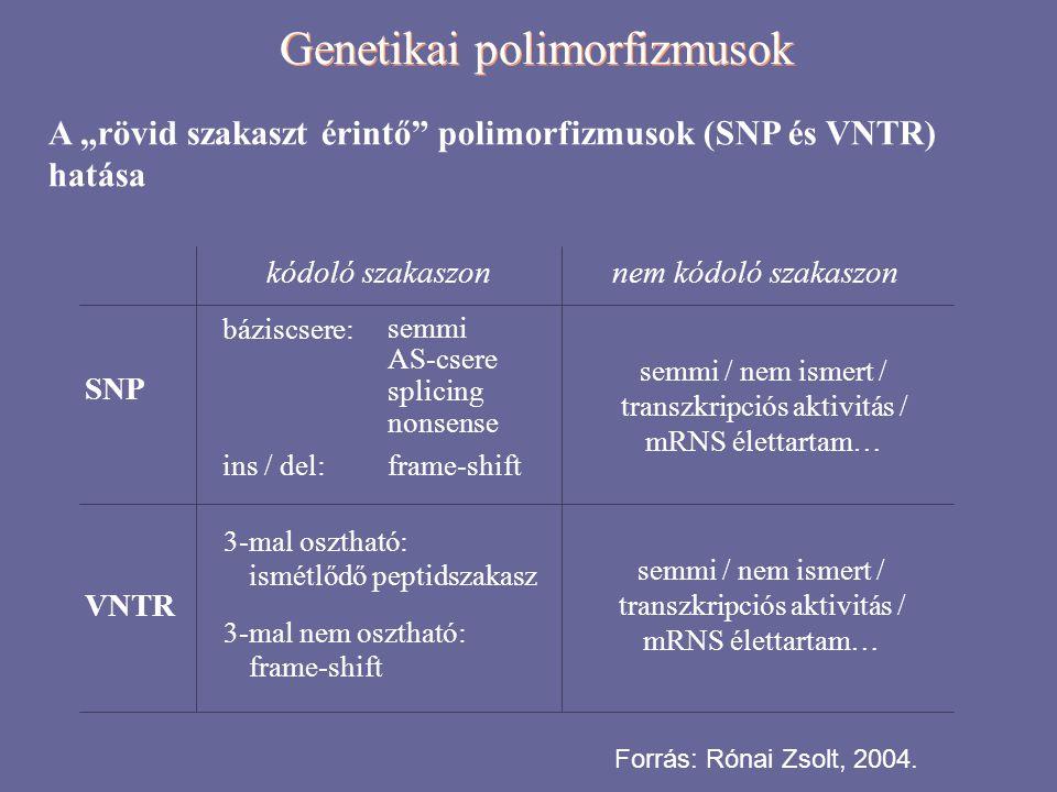 """Genetikai polimorfizmusok A """"rövid szakaszt érintő"""" polimorfizmusok (SNP és VNTR) hatása SNP VNTR kódoló szakaszonnem kódoló szakaszon báziscsere: sem"""