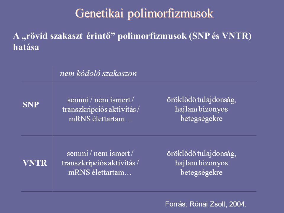 """Genetikai polimorfizmusok A """"rövid szakaszt érintő"""" polimorfizmusok (SNP és VNTR) hatása SNP VNTR nem kódoló szakaszon semmi / nem ismert / transzkrip"""