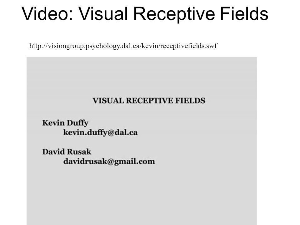 Video: Visual Receptive Fields http://visiongroup.psychology.dal.ca/kevin/receptivefields.swf