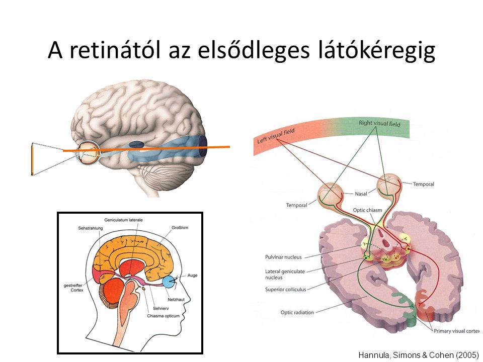 A retinától az elsődleges látókéregig Hannula, Simons & Cohen (2005)