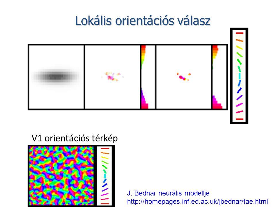 V1 orientációs térkép J. Bednar neurális modellje http://homepages.inf.ed.ac.uk/jbednar/tae.html Lokális orientációs válasz
