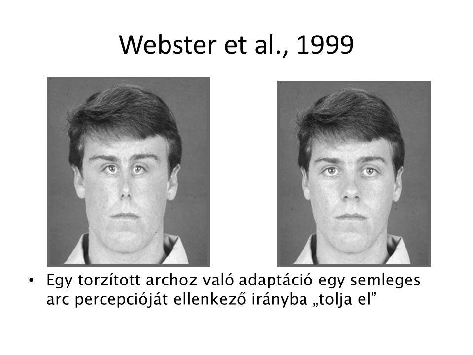 """Webster et al., 1999 Egy torzított archoz való adaptáció egy semleges arc percepcióját ellenkező irányba """"tolja el"""""""