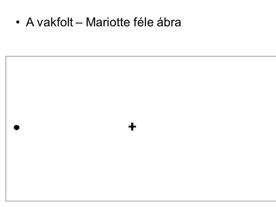 A vakfolt – Mariotte féle ábra