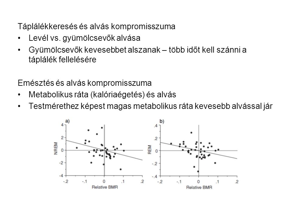 Táplálékkeresés és alvás kompromisszuma Levél vs. gyümölcsevők alvása Gyümölcsevők kevesebbet alszanak – több időt kell szánni a táplálék fellelésére