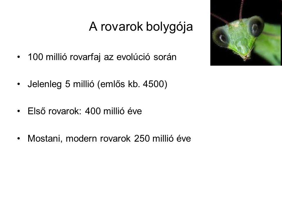 A rovarok bolygója 100 millió rovarfaj az evolúció során Jelenleg 5 millió (emlős kb. 4500) Első rovarok: 400 millió éve Mostani, modern rovarok 250 m