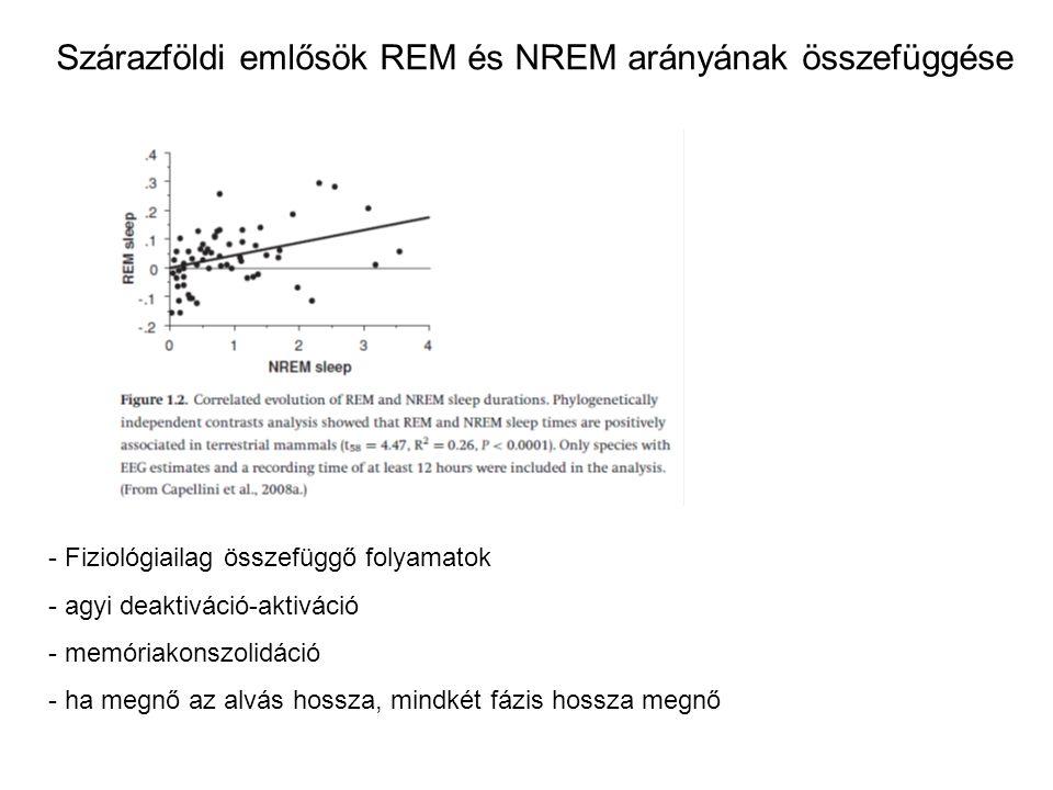 Szárazföldi emlősök REM és NREM arányának összefüggése - Fiziológiailag összefüggő folyamatok - agyi deaktiváció-aktiváció - memóriakonszolidáció - ha