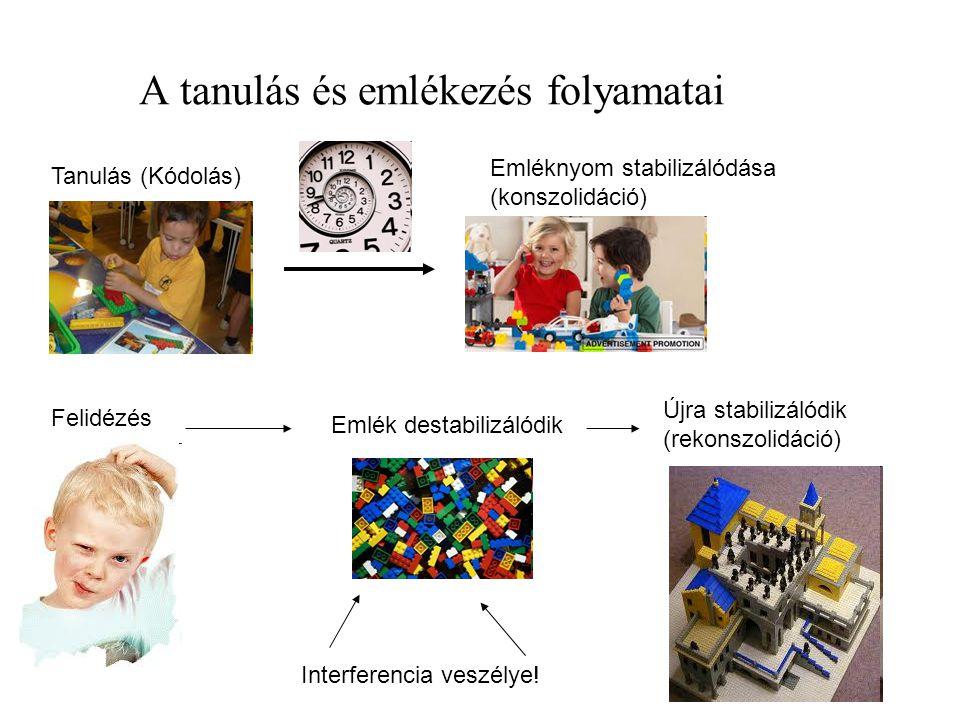 A tanulás és emlékezés folyamatai Tanulás (Kódolás) Emléknyom stabilizálódása (konszolidáció) Felidézés Emlék destabilizálódik Interferencia veszélye!