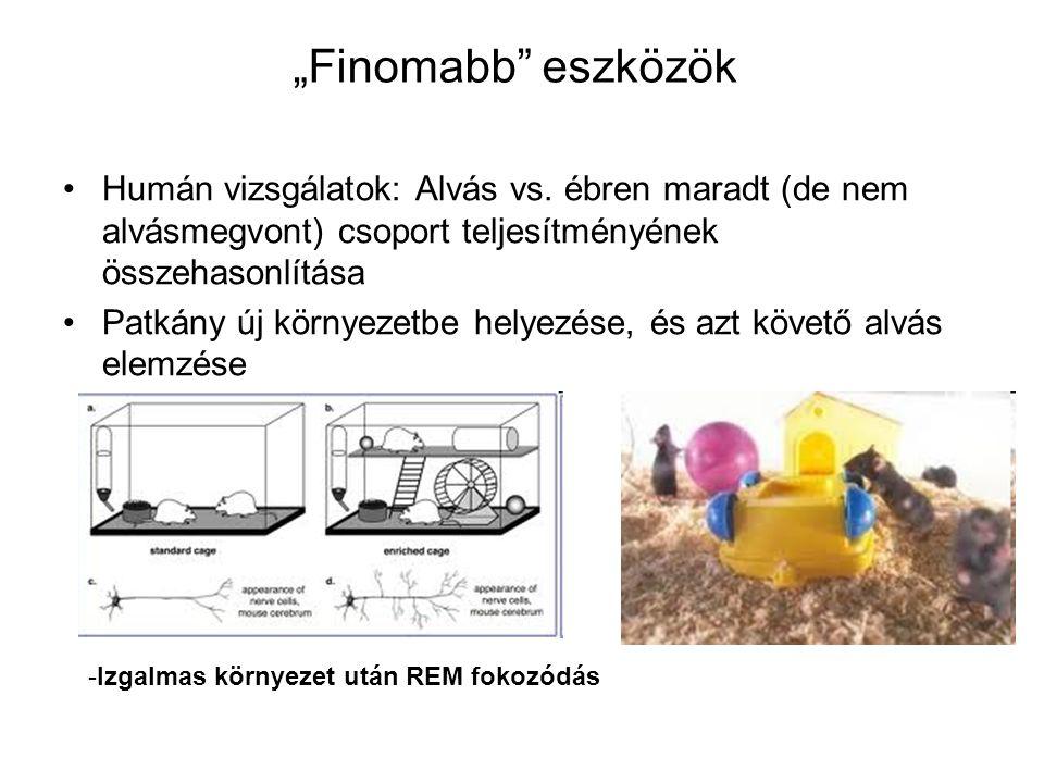 """""""Finomabb"""" eszközök Humán vizsgálatok: Alvás vs. ébren maradt (de nem alvásmegvont) csoport teljesítményének összehasonlítása Patkány új környezetbe h"""