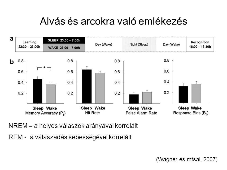 Alvás és arcokra való emlékezés (Wagner és mtsai, 2007) NREM – a helyes válaszok arányával korrelált REM - a válaszadás sebességével korrelált