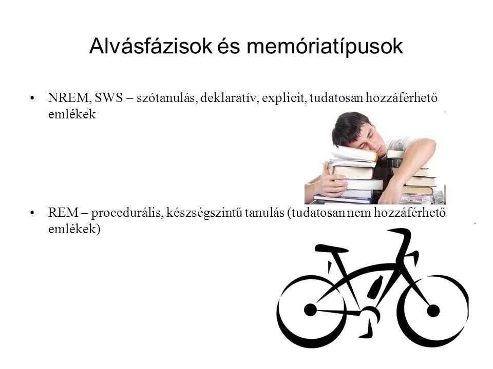 Alvásfázisok és memóriatípusok NREM, SWS – szótanulás, deklaratív, explicit, tudatosan hozzáférhető emlékek REM – procedurális, készségszintű tanulás