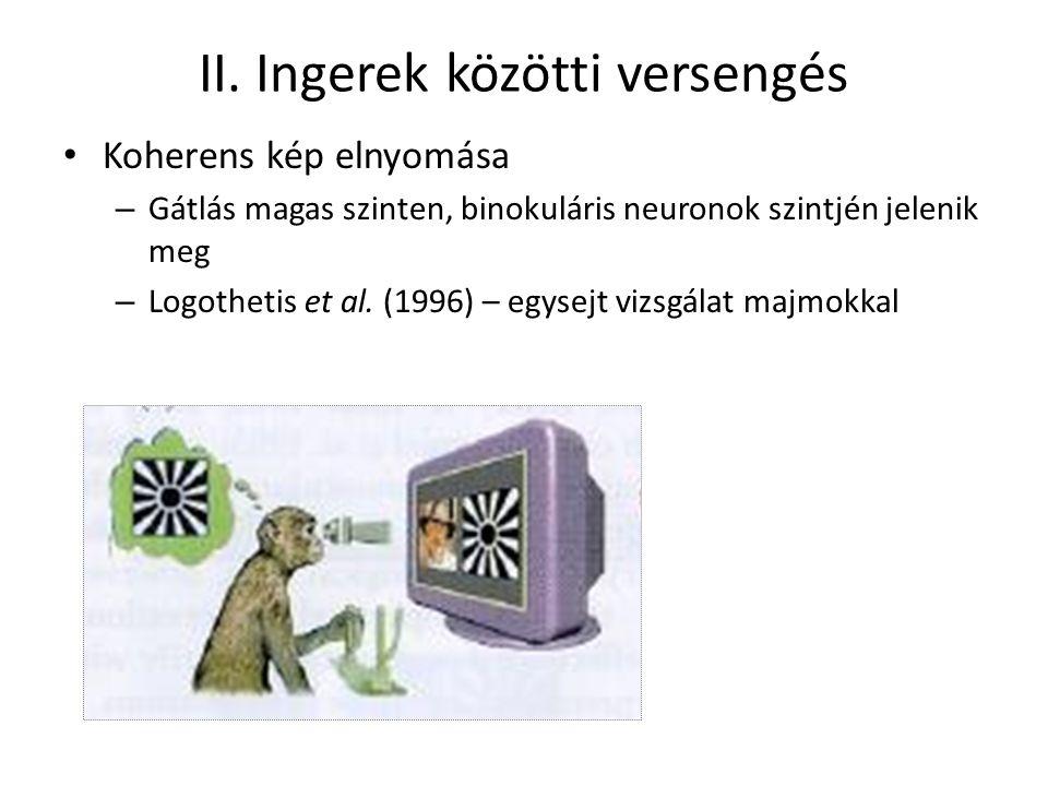 II. Ingerek közötti versengés Koherens kép elnyomása – Gátlás magas szinten, binokuláris neuronok szintjén jelenik meg – Logothetis et al. (1996) – eg