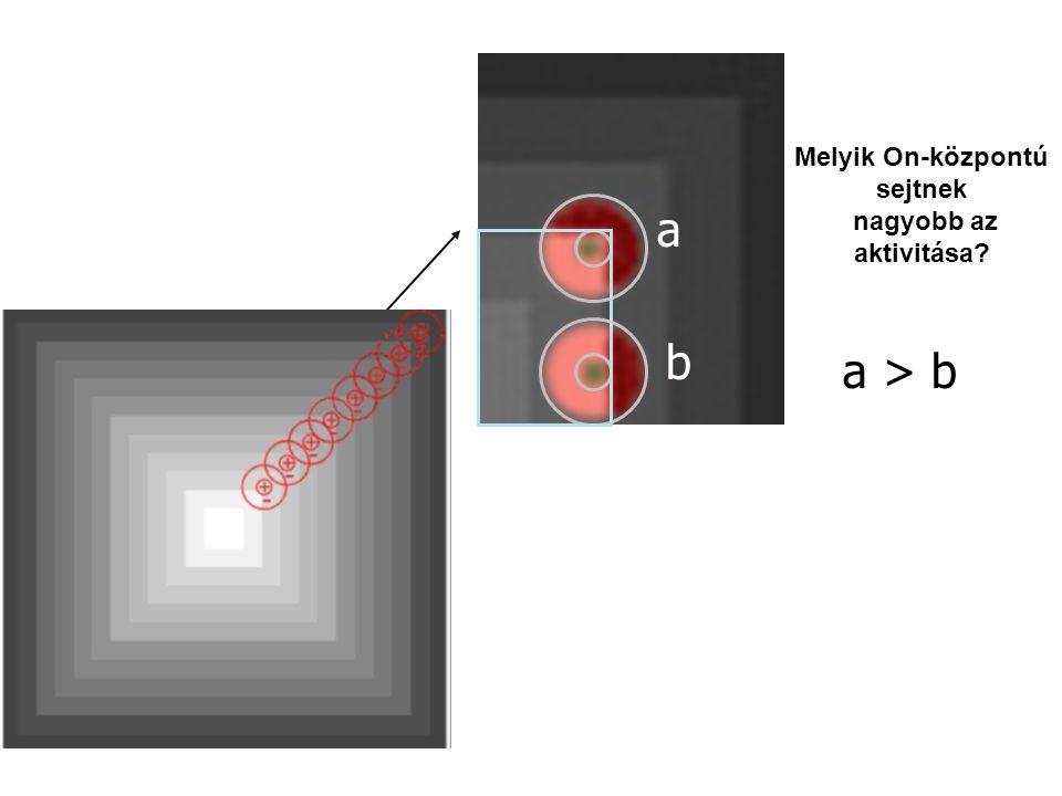 a a b b a > b a b Melyik On-központú sejtnek nagyobb az aktivitása?