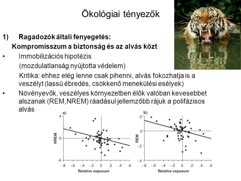 Ökológiai tényezők 1)Ragadozók általi fenyegetés: Kompromisszum a biztonság és az alvás közt Immobilizációs hipotézis (mozdulatlanság nyújtotta védelem) Kritika: ehhez elég lenne csak pihenni, alvás fokozhatja is a veszélyt (lassú ébredés, csökkenő menekülési esélyek) Növényevők, veszélyes környezetben élők valóban kevesebbet alszanak (REM,NREM) ráadásul jellemzőbb rájuk a polifázisos alvás
