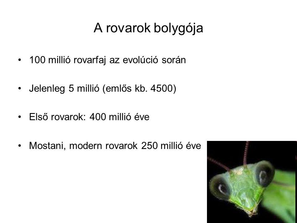 A rovarok bolygója 100 millió rovarfaj az evolúció során Jelenleg 5 millió (emlős kb.