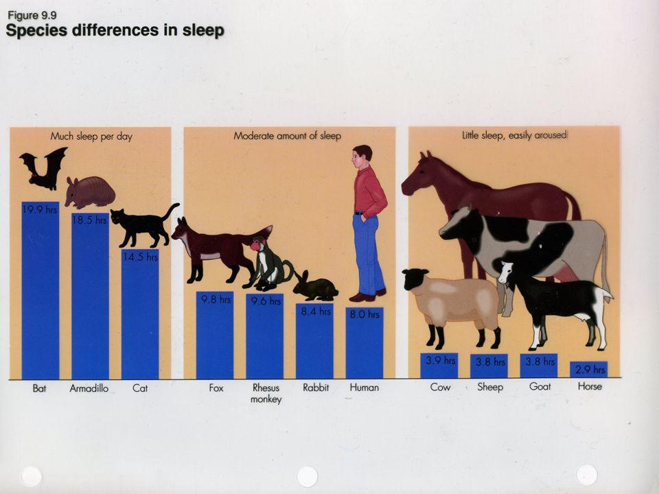 Az alvás rugalmassága Fenyegetettség, migráció (pl.