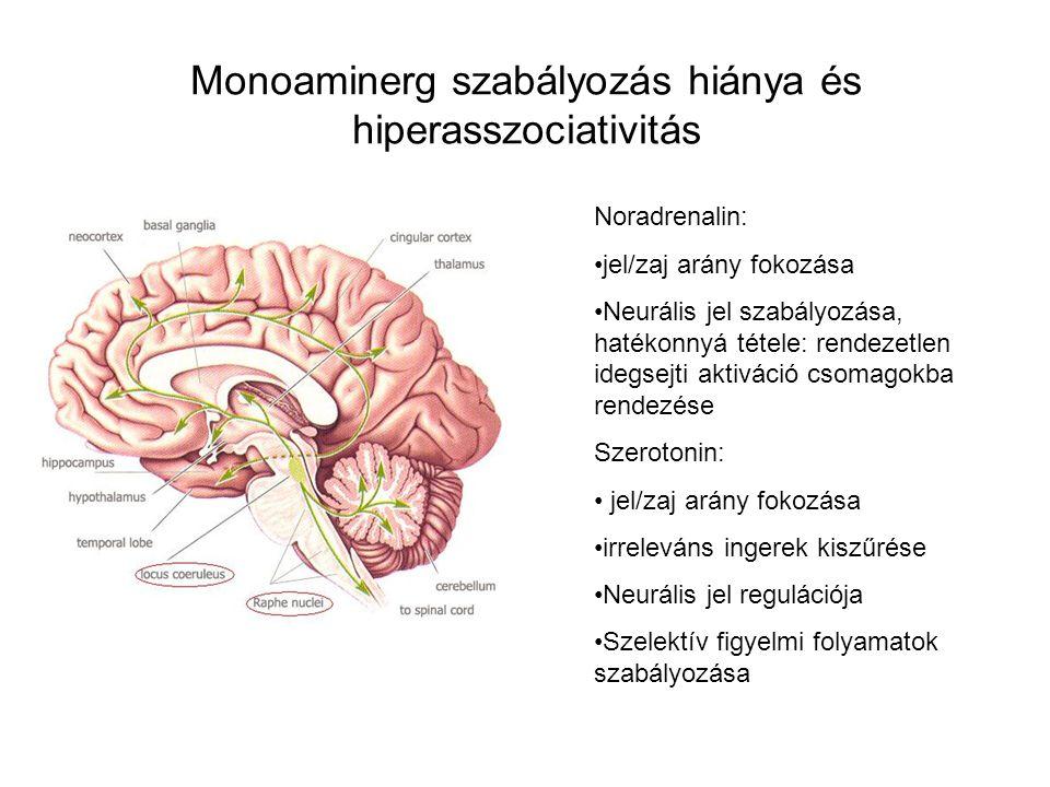 Monoaminerg szabályozás hiánya és hiperasszociativitás Noradrenalin: jel/zaj arány fokozása Neurális jel szabályozása, hatékonnyá tétele: rendezetlen