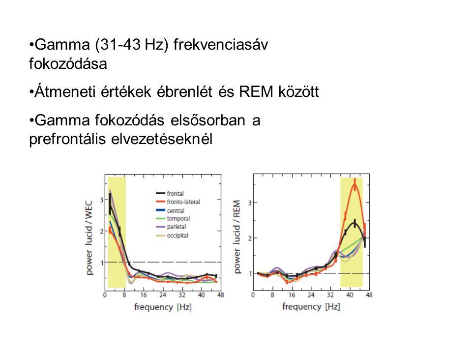 Gamma (31-43 Hz) frekvenciasáv fokozódása Átmeneti értékek ébrenlét és REM között Gamma fokozódás elsősorban a prefrontális elvezetéseknél