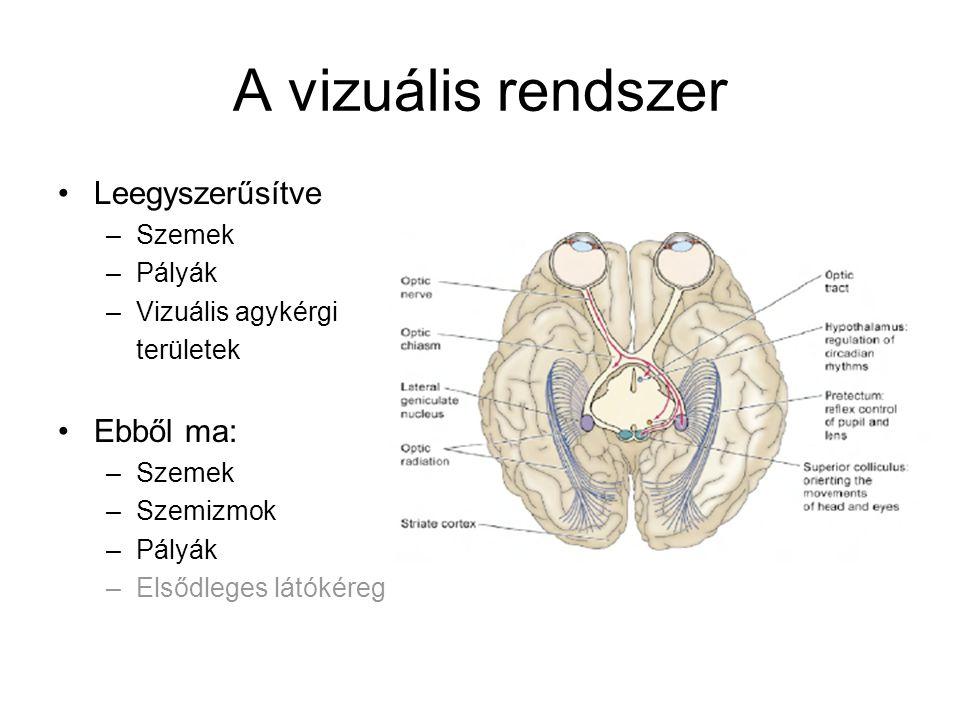 A vizuális rendszer Leegyszerűsítve –Szemek –Pályák –Vizuális agykérgi területek Ebből ma: –Szemek –Szemizmok –Pályák –Elsődleges látókéreg