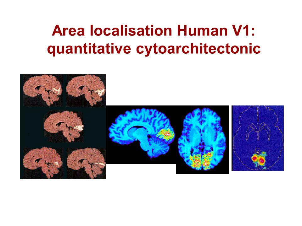 Area localisation Human V1: quantitative cytoarchitectonic