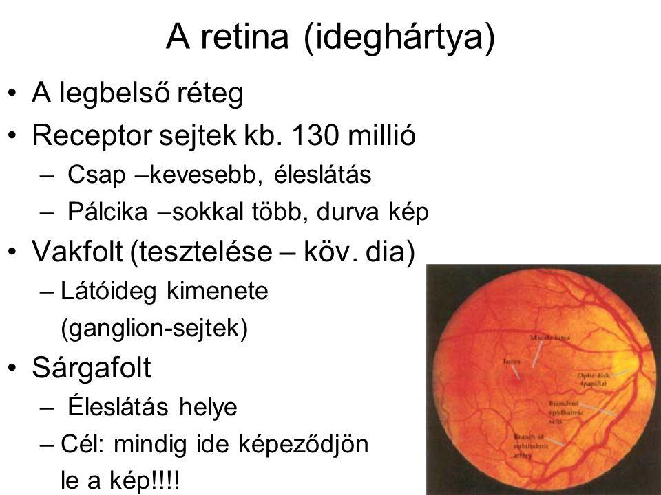 A retina (ideghártya) A legbelső réteg Receptor sejtek kb. 130 millió – Csap –kevesebb, éleslátás – Pálcika –sokkal több, durva kép Vakfolt (tesztelés