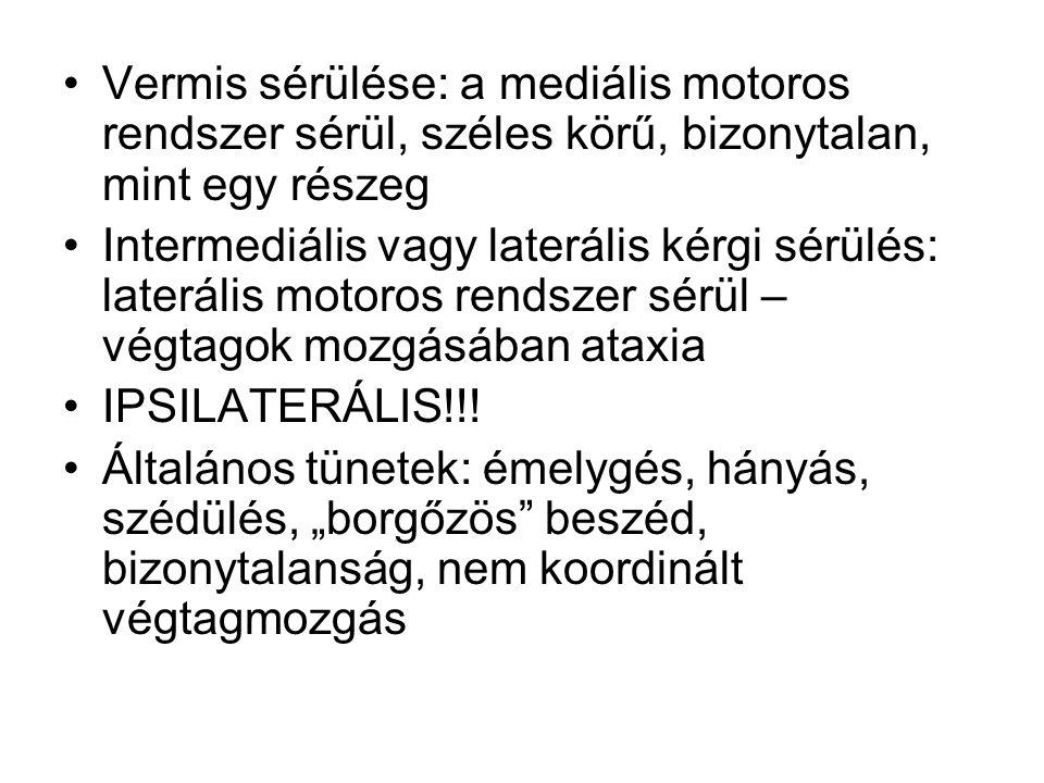 Vermis sérülése: a mediális motoros rendszer sérül, széles körű, bizonytalan, mint egy részeg Intermediális vagy laterális kérgi sérülés: laterális motoros rendszer sérül – végtagok mozgásában ataxia IPSILATERÁLIS!!.