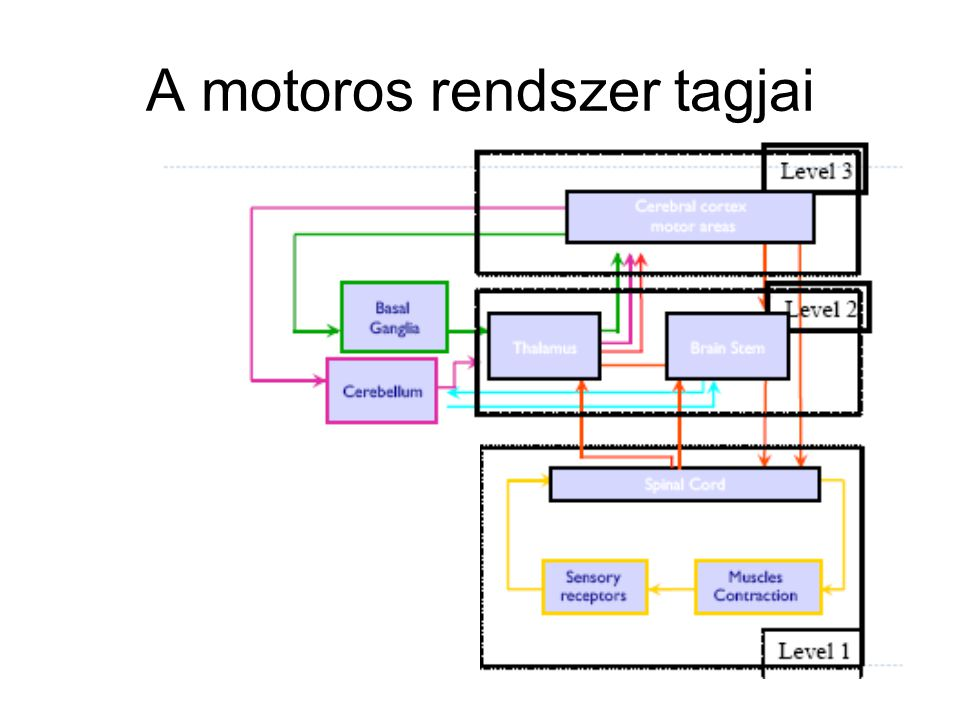 Irodalom Fonyó – Ligeti: Az orvosi élettan tankönyve Blumenfeld: Neuroanatomy through clinical cases Magyar nyelvű fogalomtár: http://drinfo.eum.hu/drinfo/pid/0/betegsegKonyv Properties/oid/0/KonyvReszegyseg.4_2053 http://drinfo.eum.hu/drinfo/pid/0/betegsegKonyv Properties/oid/0/KonyvReszegyseg.4_2053
