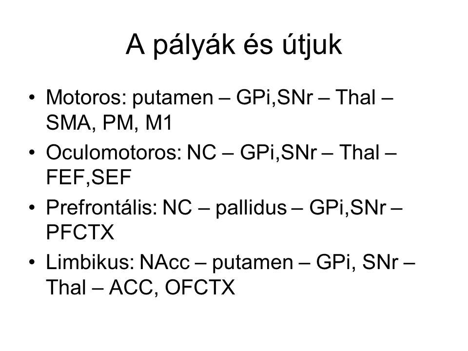 A pályák és útjuk Motoros: putamen – GPi,SNr – Thal – SMA, PM, M1 Oculomotoros: NC – GPi,SNr – Thal – FEF,SEF Prefrontális: NC – pallidus – GPi,SNr – PFCTX Limbikus: NAcc – putamen – GPi, SNr – Thal – ACC, OFCTX