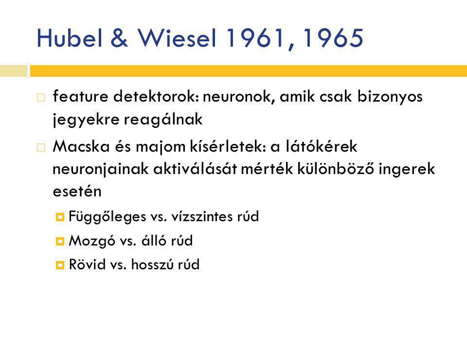 Hubel & Wiesel 1961, 1965  feature detektorok: neuronok, amik csak bizonyos jegyekre reagálnak  Macska és majom kísérletek: a látókérek neuronjainak