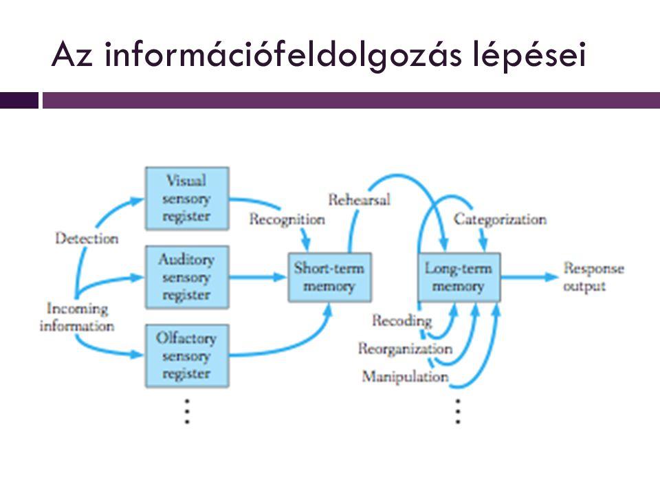 Az információfeldolgozás lépései