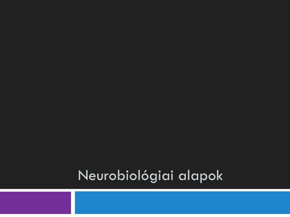 Neurobiológiai alapok
