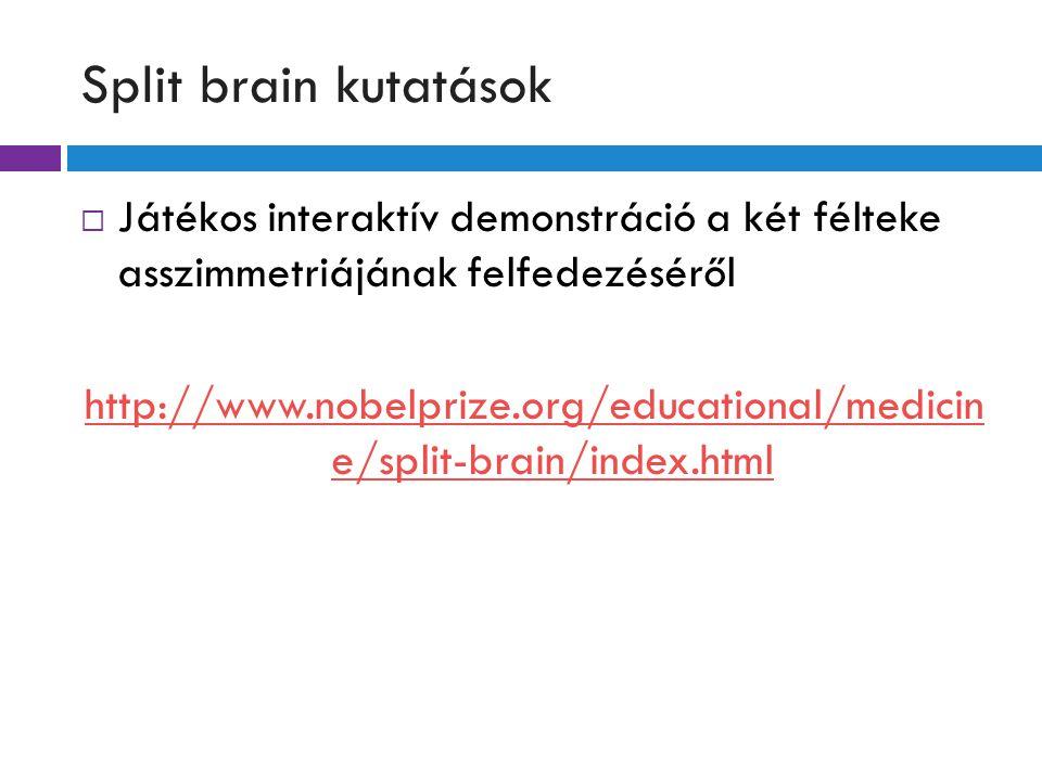 Split brain kutatások  Játékos interaktív demonstráció a két félteke asszimmetriájának felfedezéséről http://www.nobelprize.org/educational/medicin e/split-brain/index.html