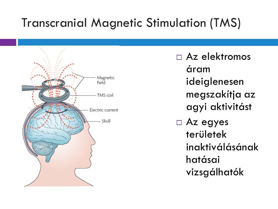 Transcranial Magnetic Stimulation (TMS)  Az elektromos áram ideiglenesen megszakítja az agyi aktivitást  Az egyes területek inaktiválásának hatásai vizsgálhatók