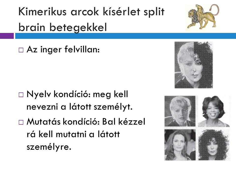 Kimerikus arcok kísérlet split brain betegekkel  Az inger felvillan:  Nyelv kondíció: meg kell nevezni a látott személyt.