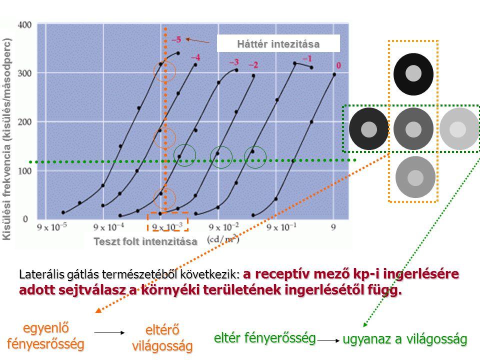 Teszt folt intenzitása Kisülési frekvencia (kisülés/másodperc) Háttér intezitása Laterális gátlás természetéből következik: a receptív mező kp-i inger