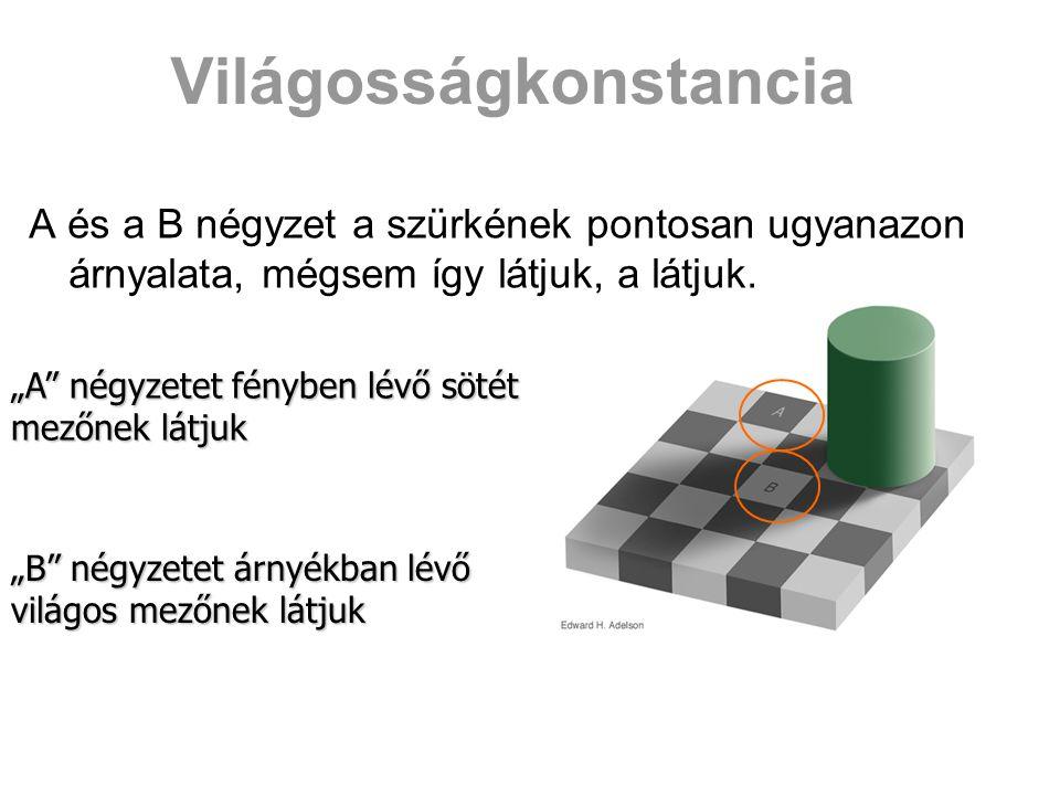 """Világosságkonstancia A és a B négyzet a szürkének pontosan ugyanazon árnyalata, mégsem így látjuk, a látjuk. """"A"""" négyzetet fényben lévő sötét mezőnek"""