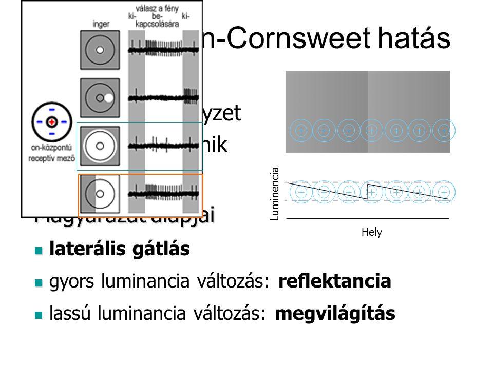 Craik-O'Brian-Cornsweet hatás Magyarázat alapjai laterális gátlás gyors luminancia változás: reflektancia lassú luminancia változás: megvilágítás Megfigyelések A baloldali négyzet sötétebbnek tűnik Luminencia Hely Luminencia Hely Luminencia Hely