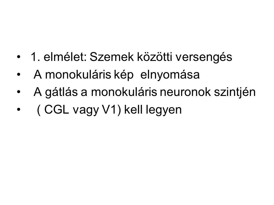 1. elmélet: Szemek közötti versengés A monokuláris kép elnyomása A gátlás a monokuláris neuronok szintjén ( CGL vagy V1) kell legyen
