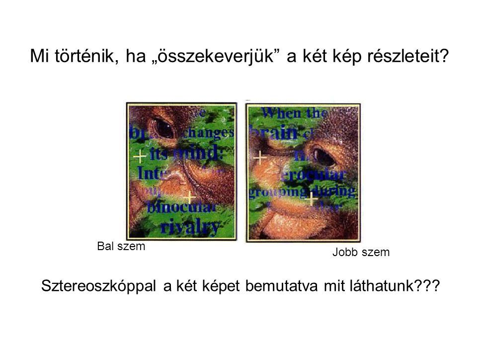 """Sztereoszkóppal a két képet bemutatva mit láthatunk??? Bal szem Jobb szem Mi történik, ha """"összekeverjük"""" a két kép részleteit?"""