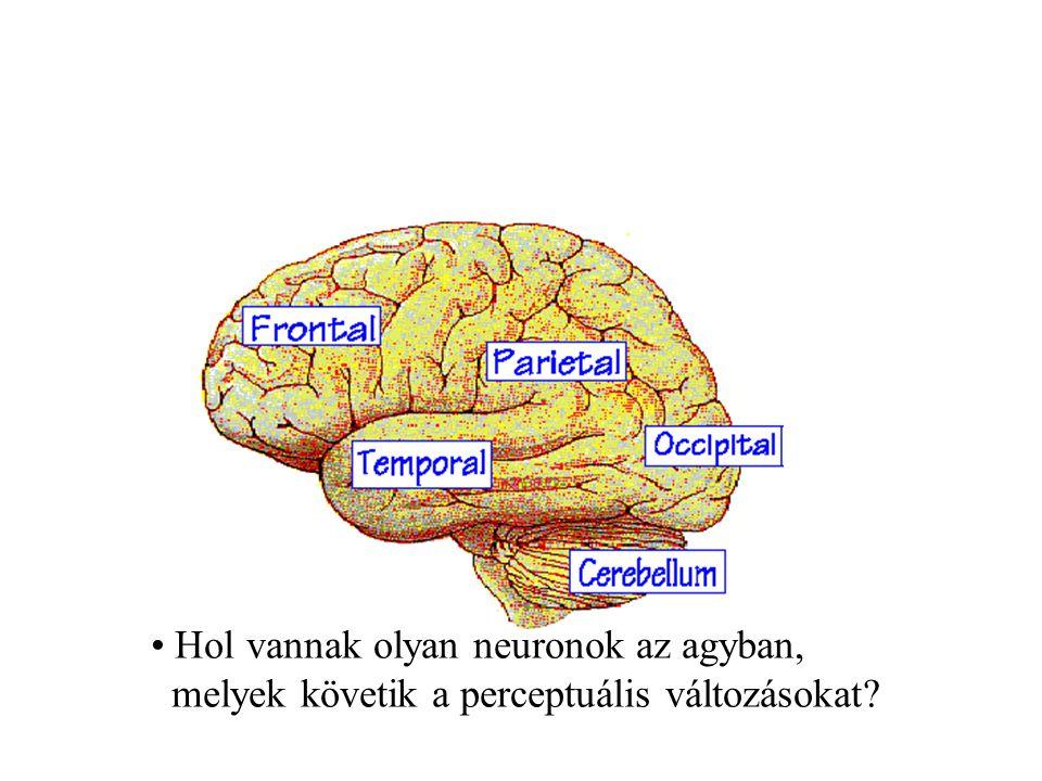 Hol vannak olyan neuronok az agyban, melyek követik a perceptuális változásokat?