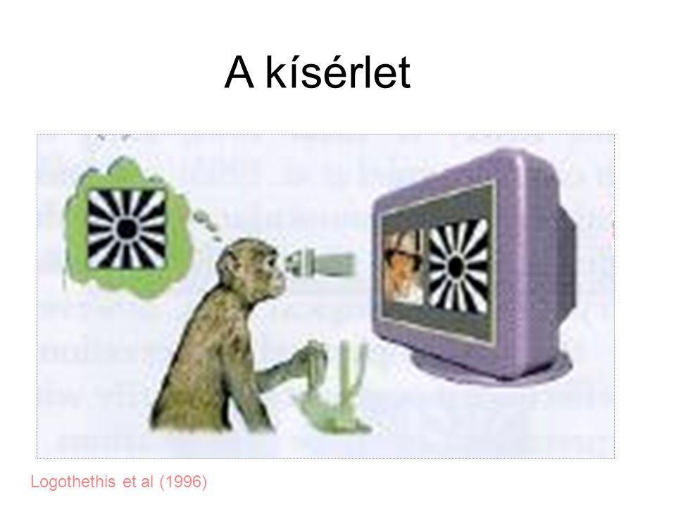 Logothethis et al (1996) A kísérlet