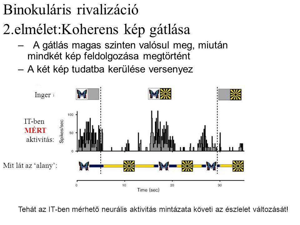 Binokuláris rivalizáció 2.elmélet:Koherens kép gátlása – A gátlás magas szinten valósul meg, miután mindkét kép feldolgozása megtörtént –A két kép tudatba kerülése versenyez Mit lát az 'alany': Inger IT-ben MÉRT aktivitás: Tehát az IT-ben mérhető neurális aktivitás mintázata követi az észlelet változását!