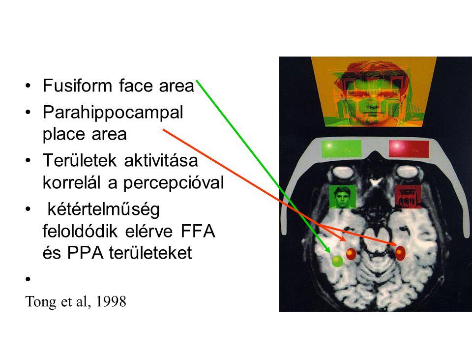 Fusiform face area Parahippocampal place area Területek aktivitása korrelál a percepcióval kétértelműség feloldódik elérve FFA és PPA területeket Tong et al, 1998