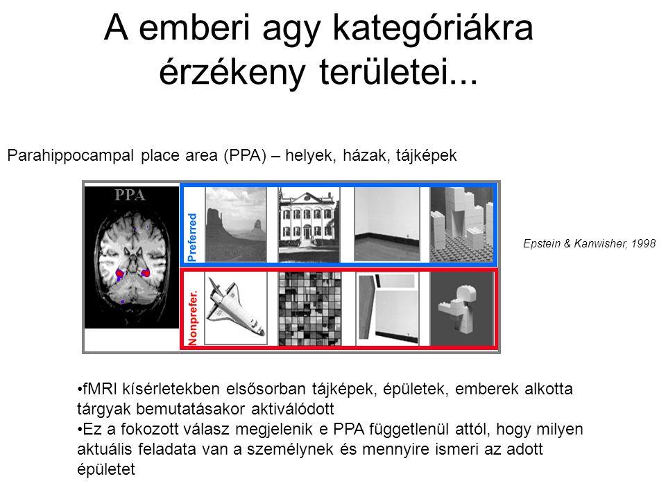 A emberi agy kategóriákra érzékeny területei... PPA Preferred Nonprefer. Parahippocampal place area (PPA) – helyek, házak, tájképek Epstein & Kanwishe