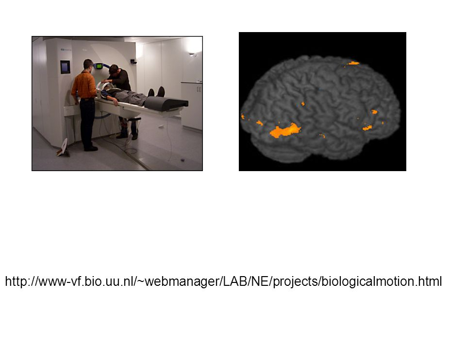 http://www-vf.bio.uu.nl/~webmanager/LAB/NE/projects/biologicalmotion.html