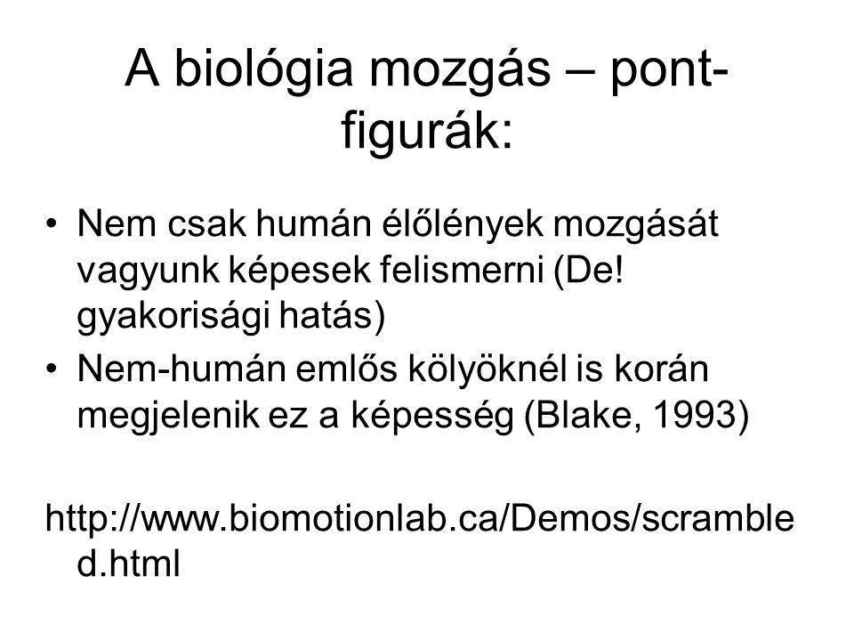 A biológia mozgás – pont- figurák: Nem csak humán élőlények mozgását vagyunk képesek felismerni (De! gyakorisági hatás) Nem-humán emlős kölyöknél is k
