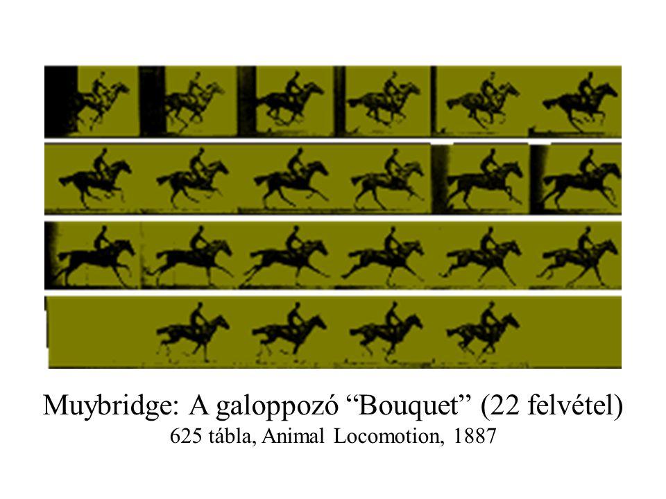"""Muybridge: A galoppozó """"Bouquet"""" (22 felvétel) 625 tábla, Animal Locomotion, 1887"""